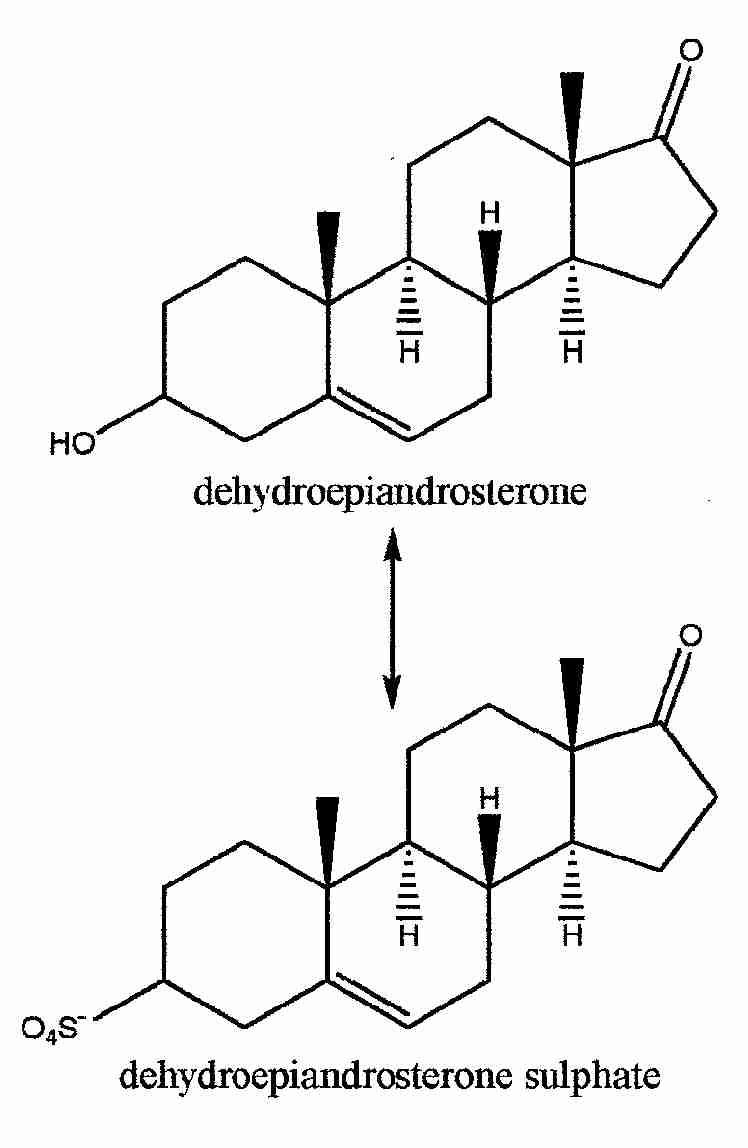 testosterone precursor